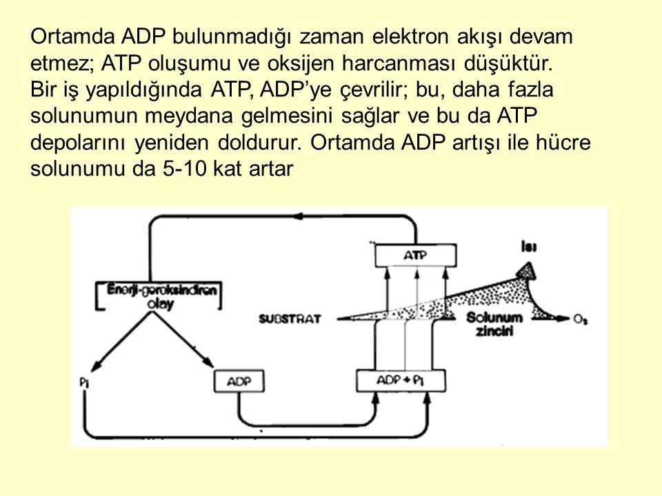 Ortamda ADP bulunmadığı zaman elektron akışı devam etmez; ATP oluşumu ve oksijen harcanması düşüktür.
