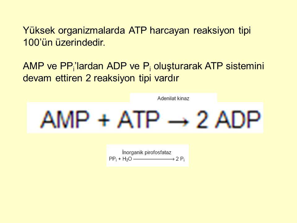 Yüksek organizmalarda ATP harcayan reaksiyon tipi 100'ün üzerindedir.