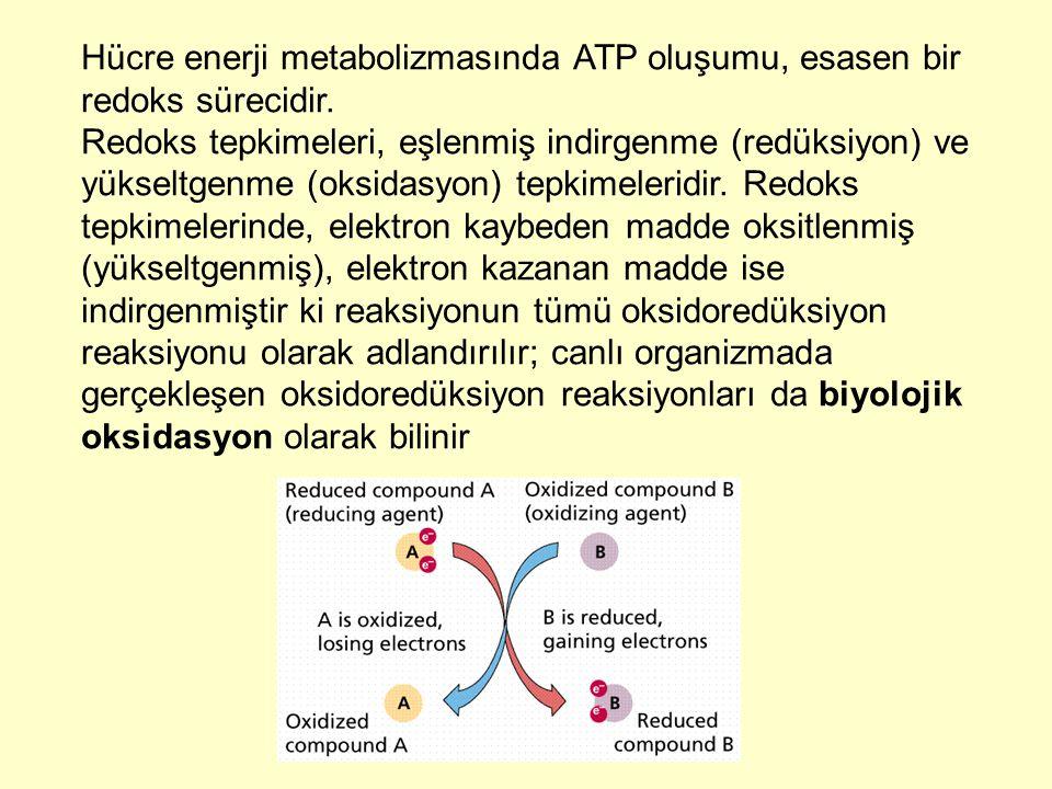 Hücre enerji metabolizmasında ATP oluşumu, esasen bir redoks sürecidir.