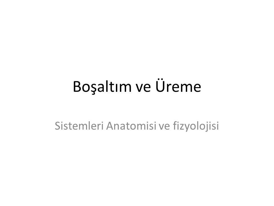 Sistemleri Anatomisi ve fizyolojisi