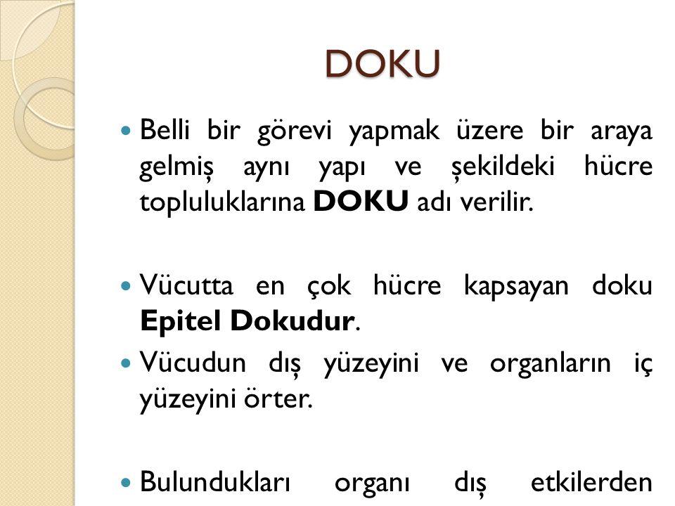 DOKU Belli bir görevi yapmak üzere bir araya gelmiş aynı yapı ve şekildeki hücre topluluklarına DOKU adı verilir.