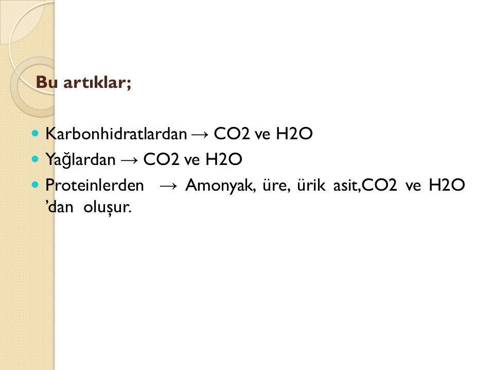 Bu artıklar; Karbonhidratlardan → CO2 ve H2O. Yağlardan → CO2 ve H2O.