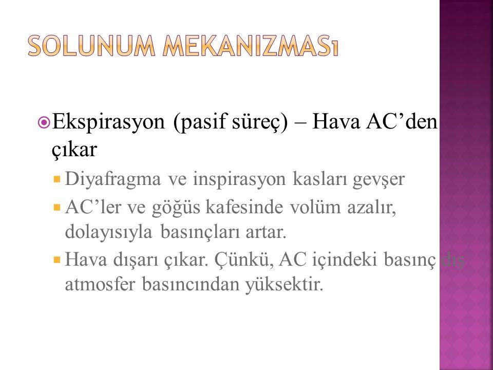 Solunum mekanizması Ekspirasyon (pasif süreç) – Hava AC'den çıkar
