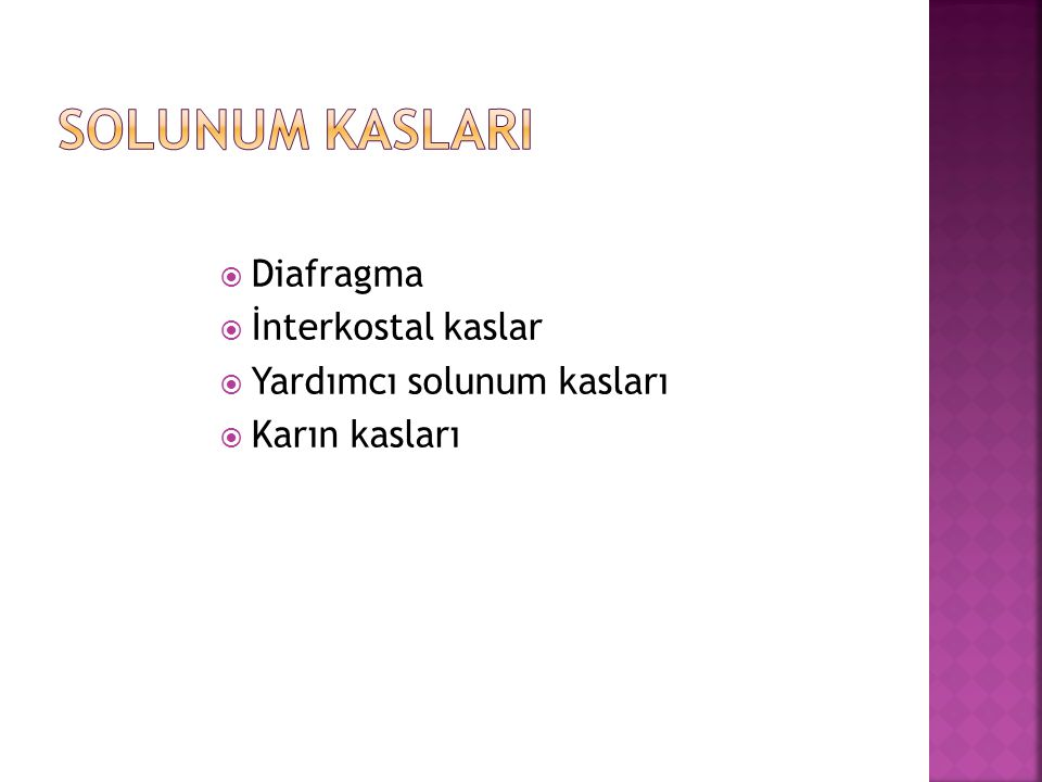 Solunum kaslarI Diafragma İnterkostal kaslar Yardımcı solunum kasları