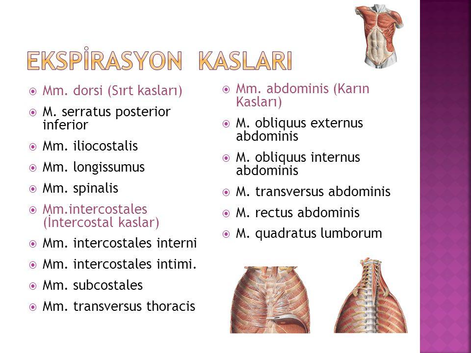 EKSPİrasyon kaslarI Mm. abdominis (Karın Kasları)
