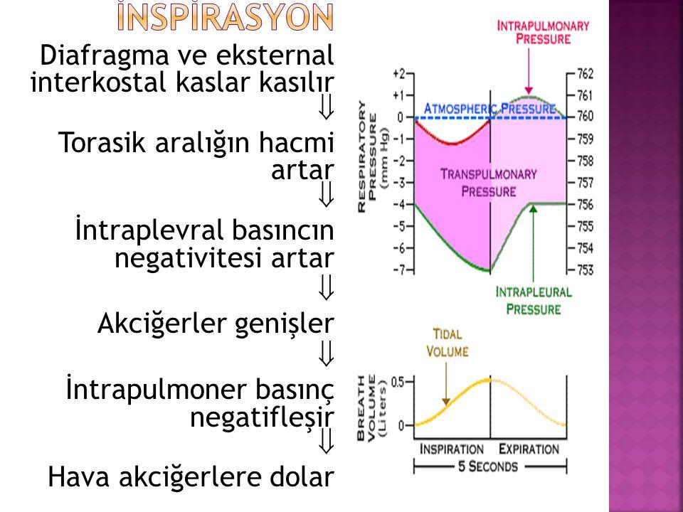 İNSPİRASYON Diafragma ve eksternal interkostal kaslar kasılır 