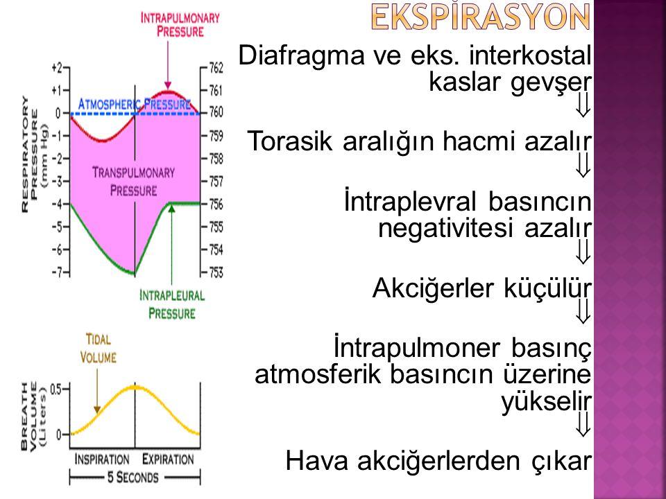 EKSPİRASYON Diafragma ve eks. interkostal kaslar gevşer 