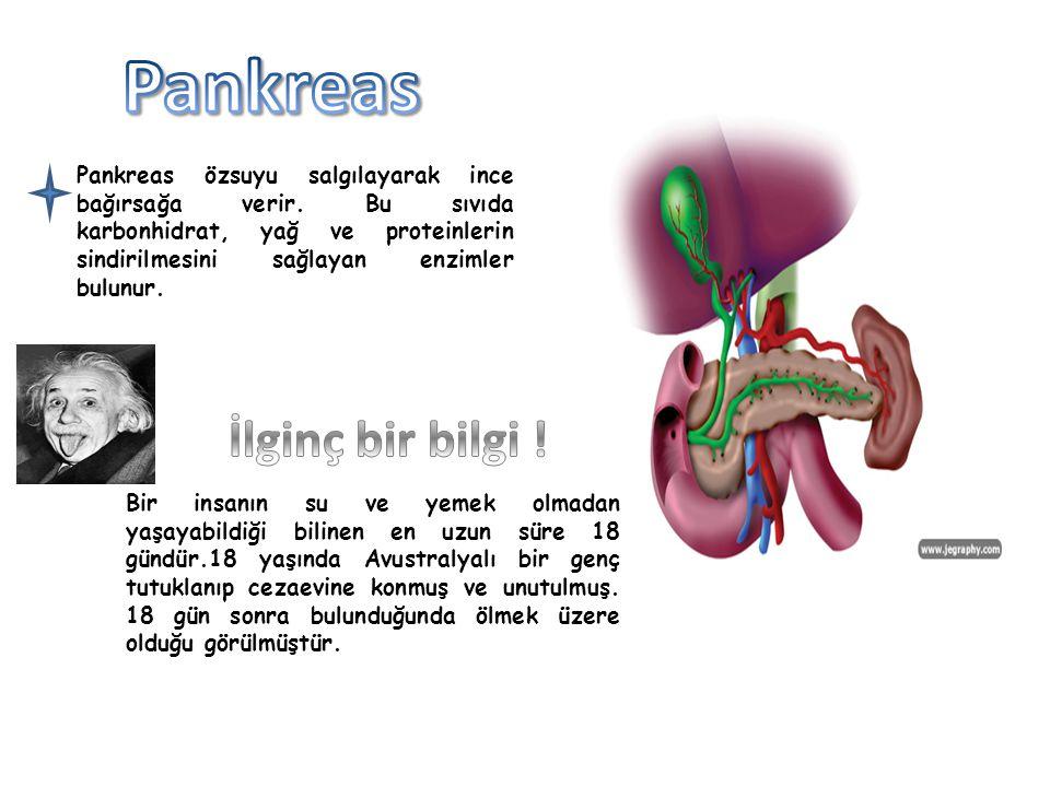 Pankreas İlginç bir bilgi !