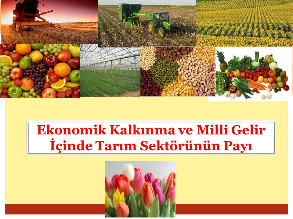 Ekonomik Kalkınma ve Milli Gelir İçinde Tarım Sektörünün Payı