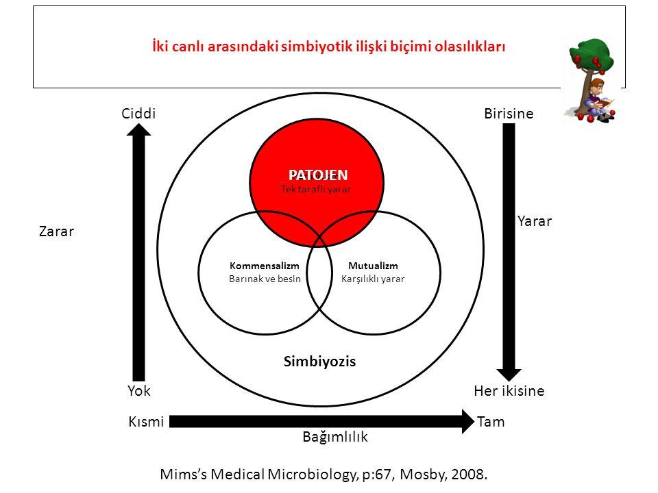 İki canlı arasındaki simbiyotik ilişki biçimi olasılıkları