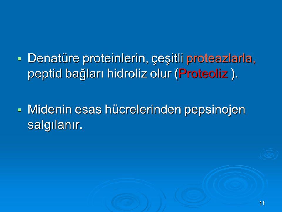 Denatüre proteinlerin, çeşitli proteazlarla, peptid bağları hidroliz olur (Proteoliz ).