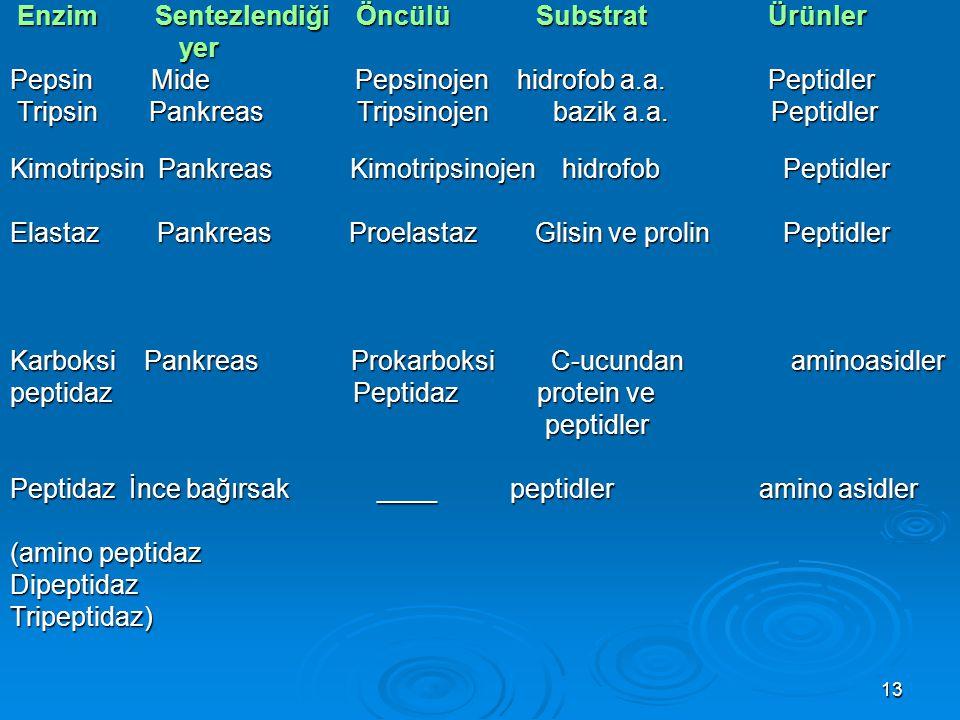 Enzim Sentezlendiği Öncülü Substrat Ürünler