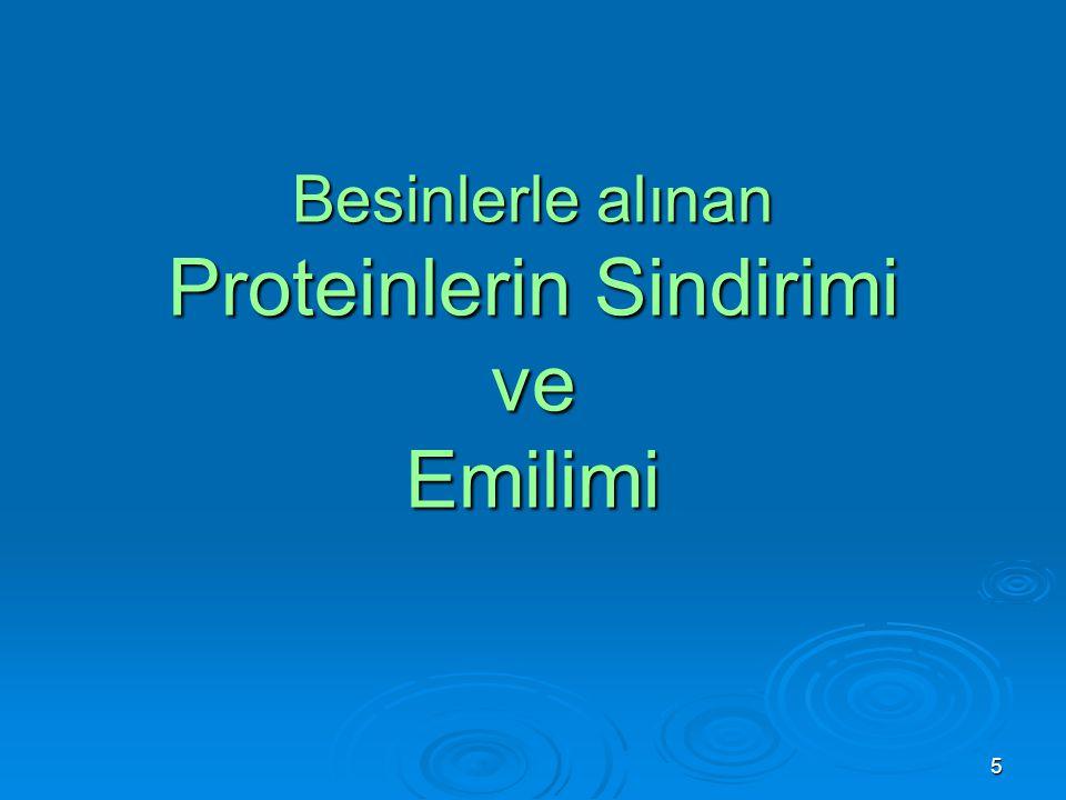 Besinlerle alınan Proteinlerin Sindirimi ve Emilimi