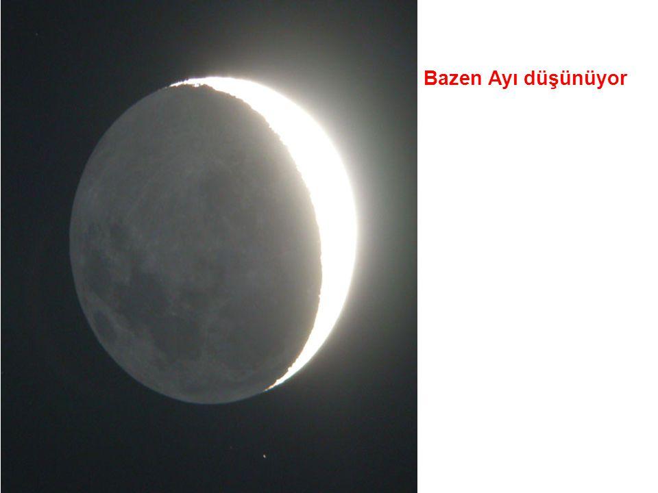 Bazen Ayı düşünüyor