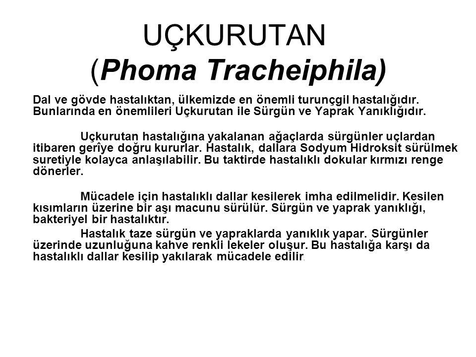 UÇKURUTAN (Phoma Tracheiphila)