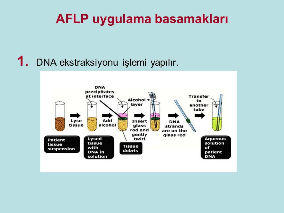 AFLP uygulama basamakları