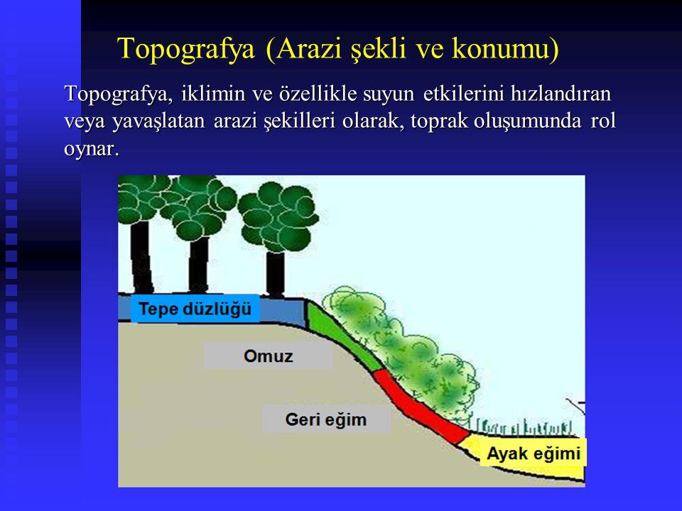 Topografya (Arazi şekli ve konumu)