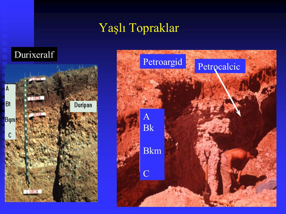 Yaşlı Topraklar Durixeralf Petroargid Petrocalcic A Bk Bkm C