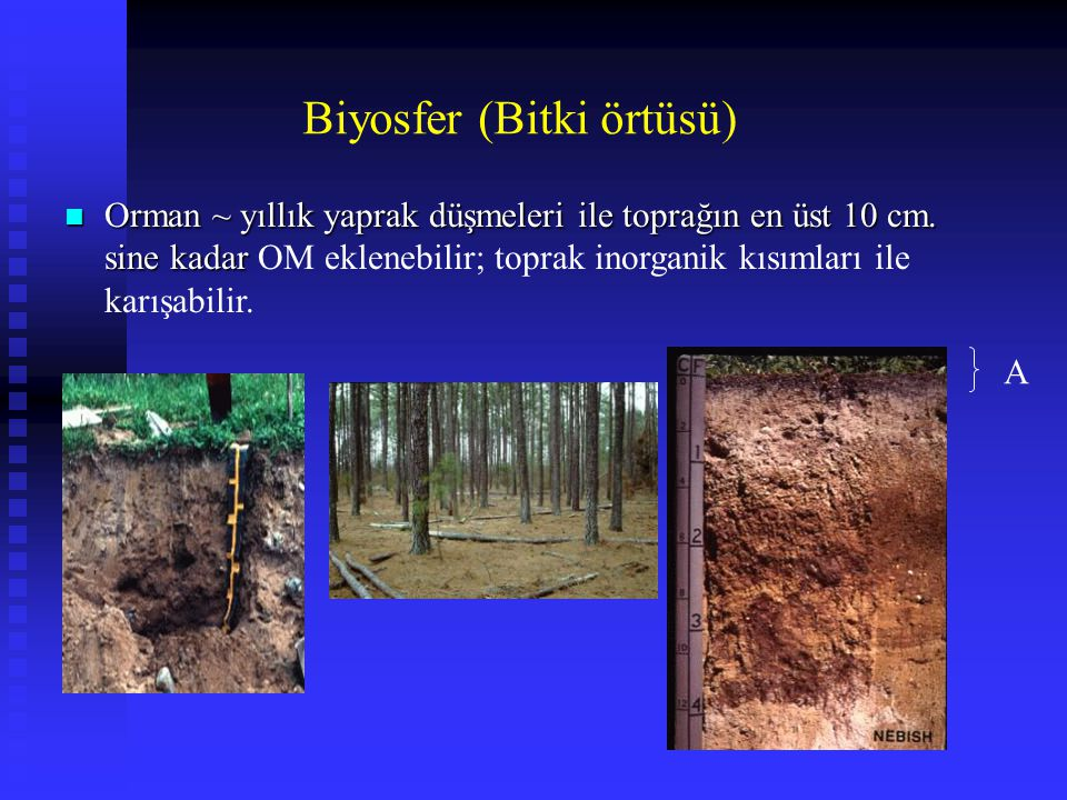 Biyosfer (Bitki örtüsü)