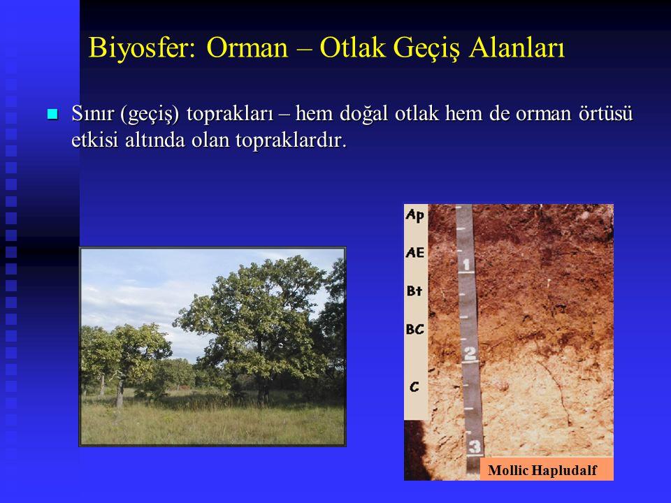 Biyosfer: Orman – Otlak Geçiş Alanları