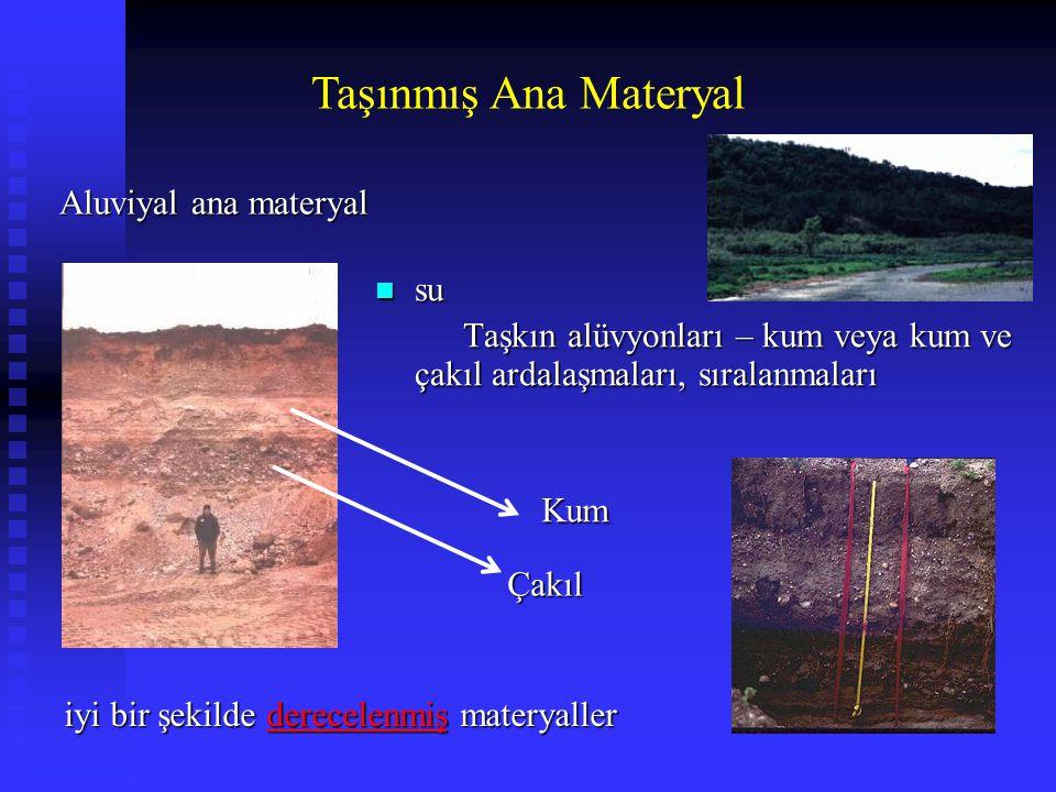 Taşınmış Ana Materyal Aluviyal ana materyal su