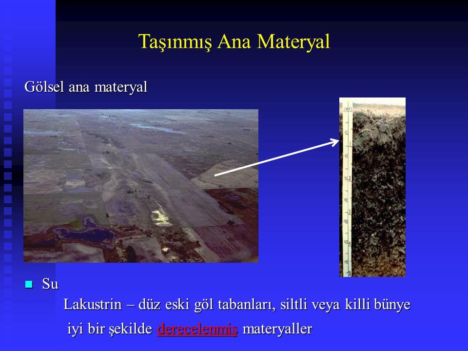 Taşınmış Ana Materyal Gölsel ana materyal Su