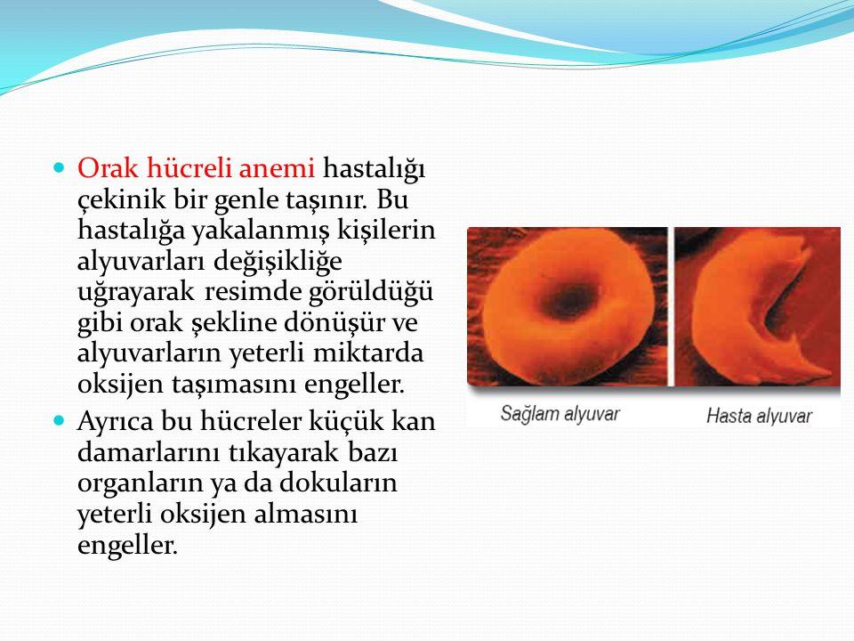 Orak hücreli anemi hastalığı çekinik bir genle taşınır