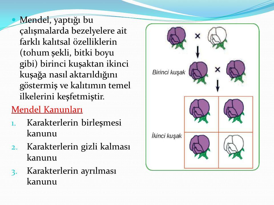 Mendel, yaptığı bu çalışmalarda bezelyelere ait farklı kalıtsal özelliklerin (tohum şekli, bitki boyu gibi) birinci kuşaktan ikinci kuşağa nasıl aktarıldığını göstermiş ve kalıtımın temel ilkelerini keşfetmiştir.