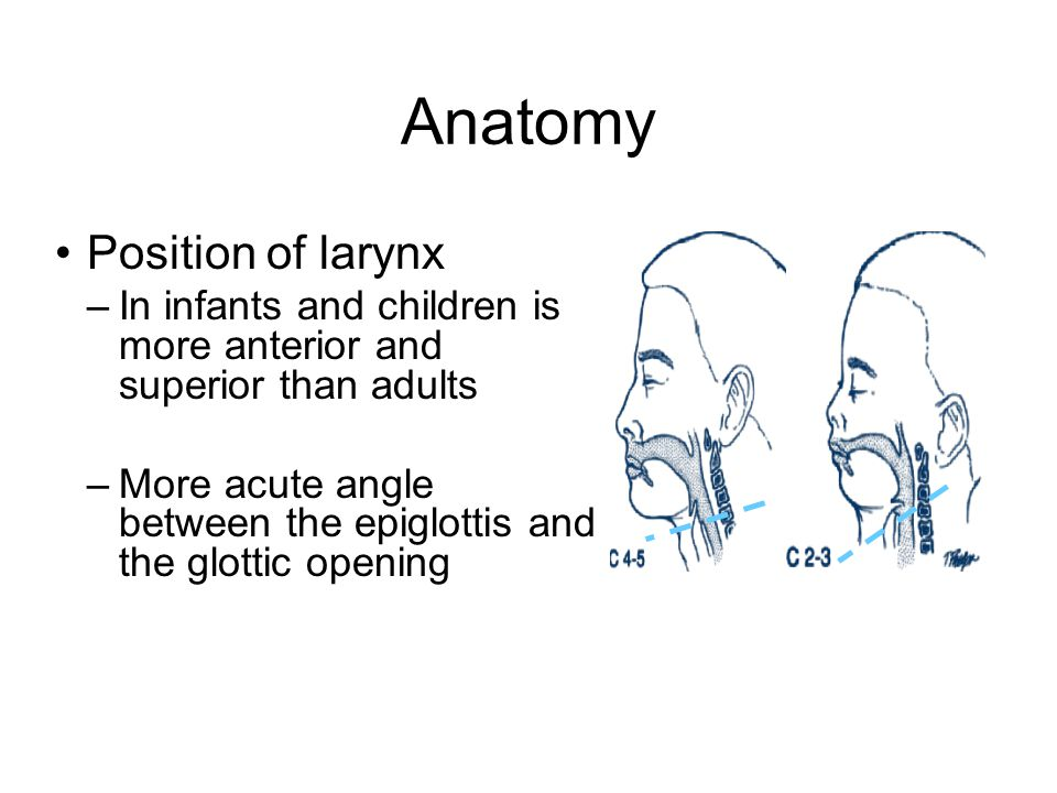 Anatomy Position of larynx