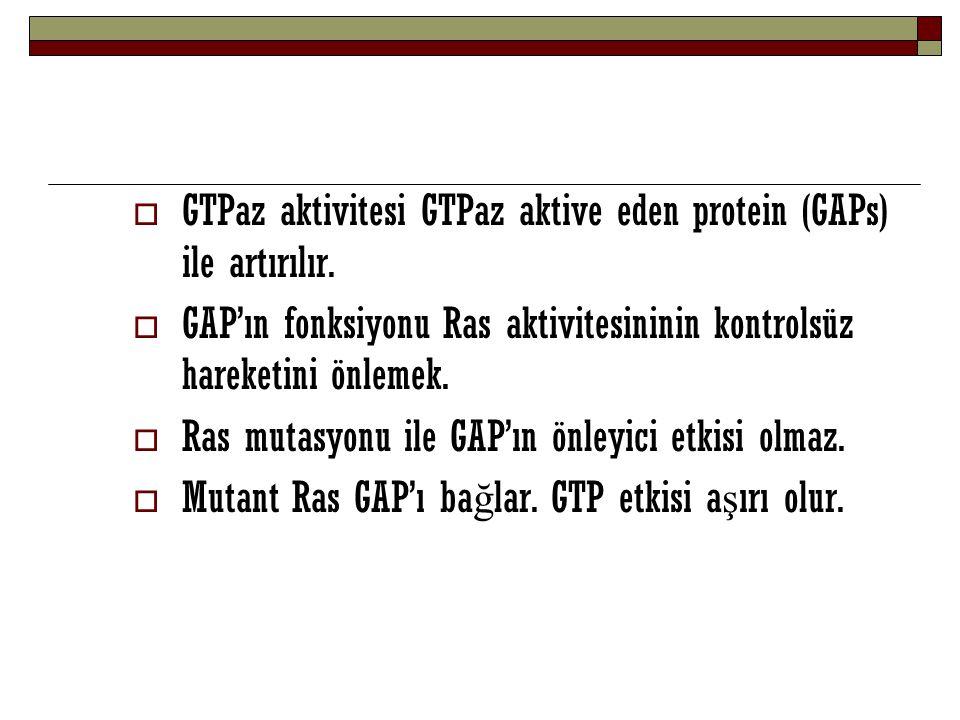 GTPaz aktivitesi GTPaz aktive eden protein (GAPs) ile artırılır.