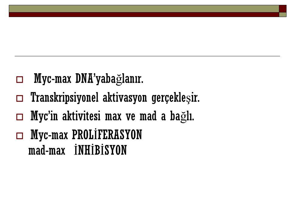 Myc-max DNA'yabağlanır.