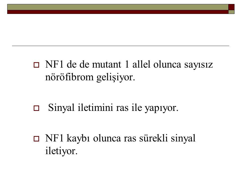 NF1 de de mutant 1 allel olunca sayısız nöröfibrom gelişiyor.