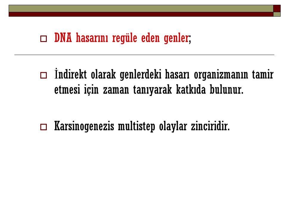 DNA hasarını regüle eden genler;