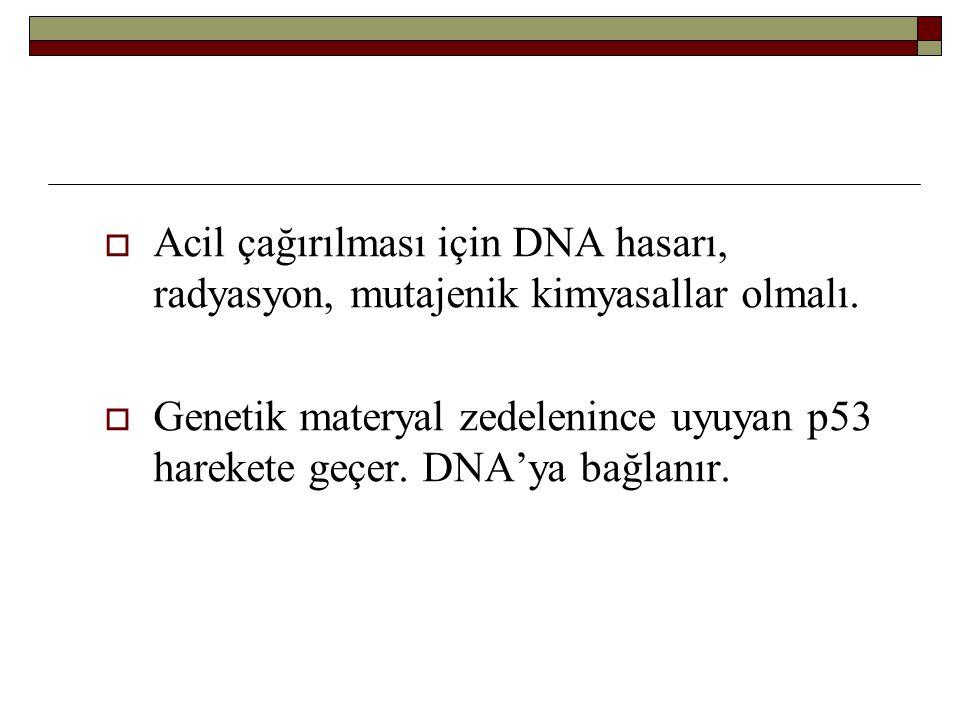 Acil çağırılması için DNA hasarı, radyasyon, mutajenik kimyasallar olmalı.