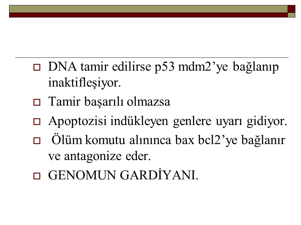 DNA tamir edilirse p53 mdm2'ye bağlanıp inaktifleşiyor.