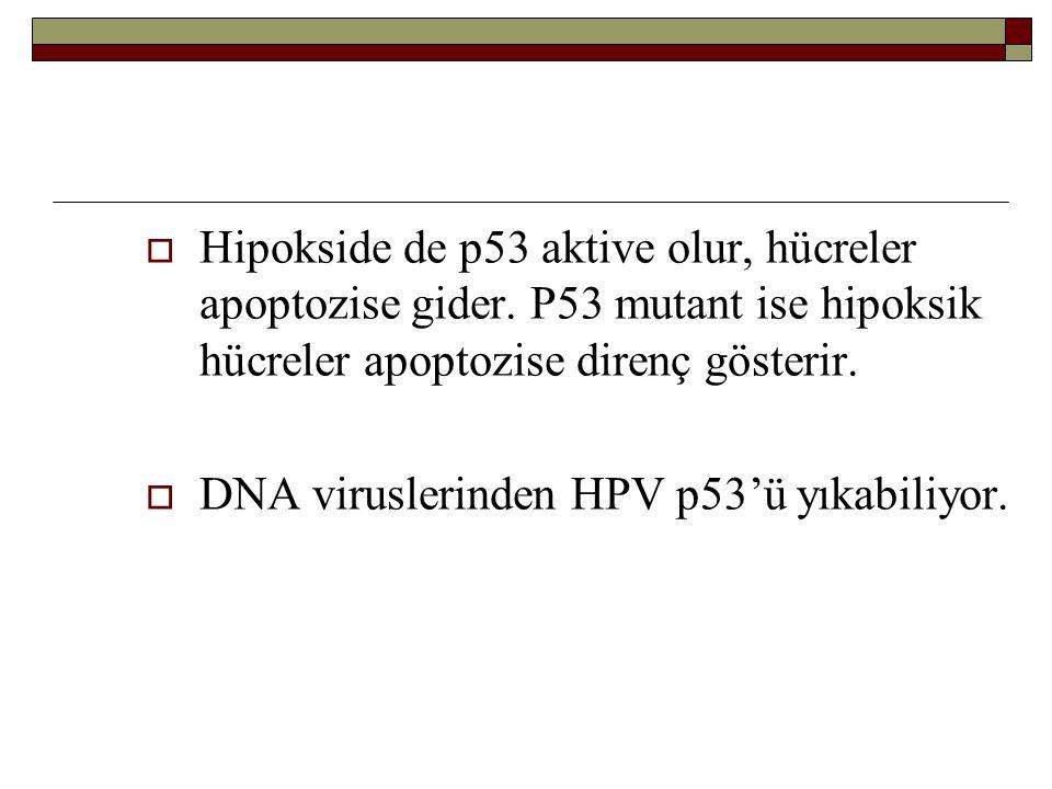 Hipokside de p53 aktive olur, hücreler apoptozise gider