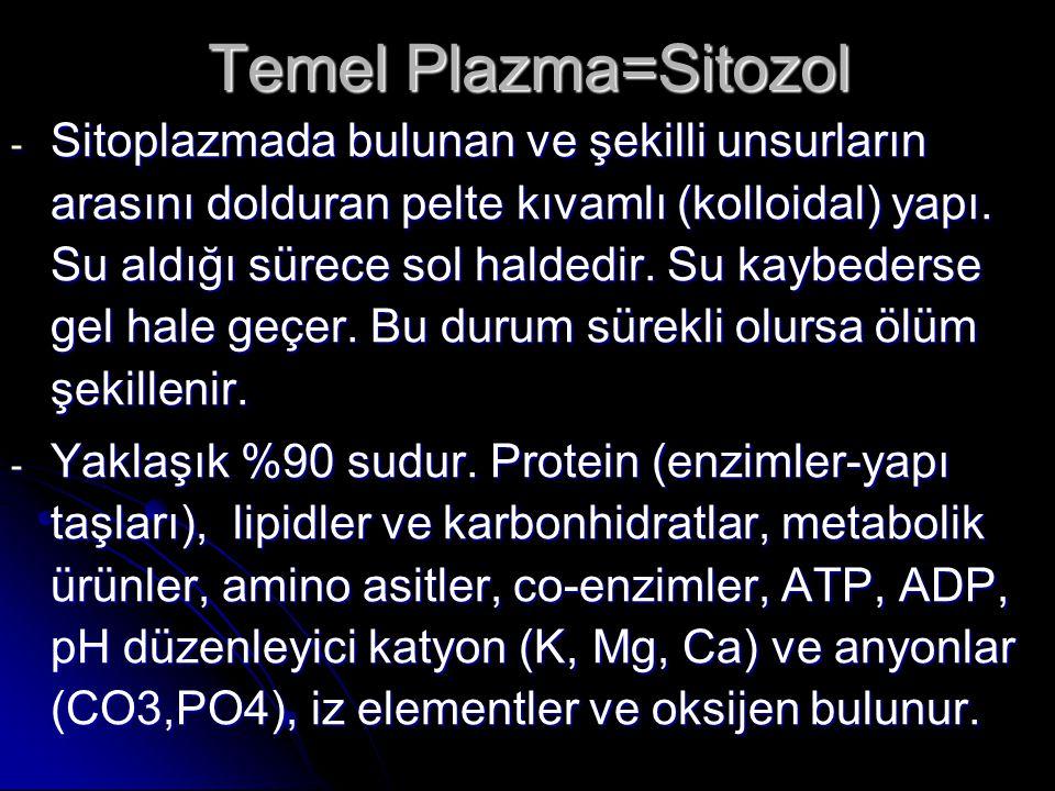 Temel Plazma=Sitozol