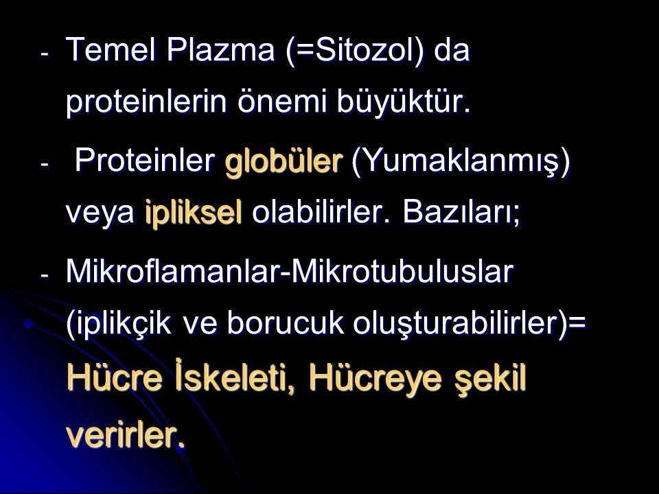 Temel Plazma (=Sitozol) da proteinlerin önemi büyüktür.