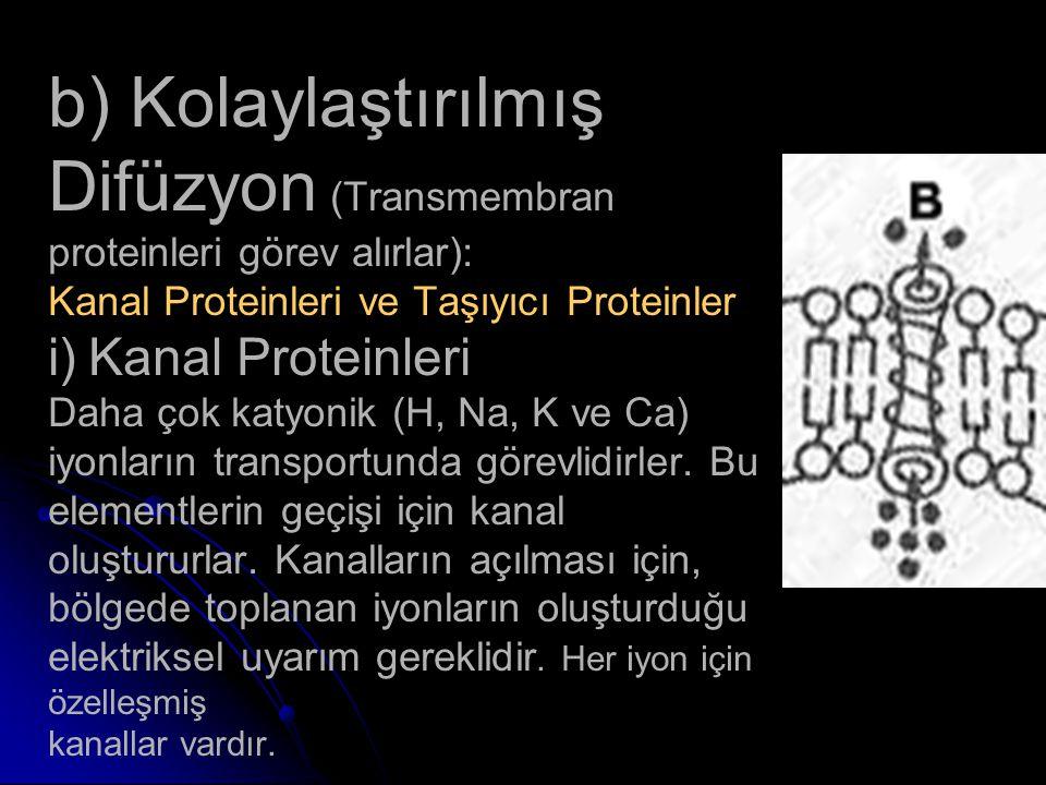 b) Kolaylaştırılmış Difüzyon (Transmembran proteinleri görev alırlar): Kanal Proteinleri ve Taşıyıcı Proteinler i) Kanal Proteinleri Daha çok katyonik (H, Na, K ve Ca) iyonların transportunda görevlidirler.