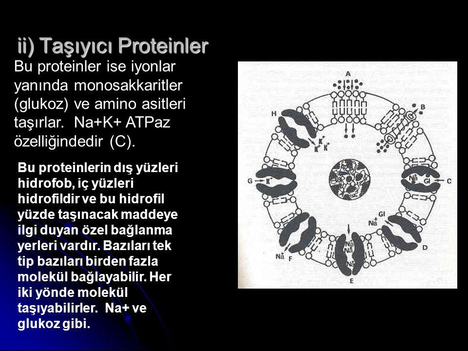 ii) Taşıyıcı Proteinler