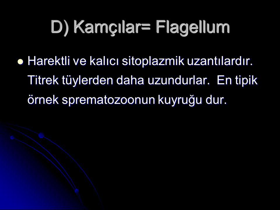 D) Kamçılar= Flagellum