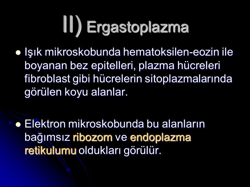 II) Ergastoplazma