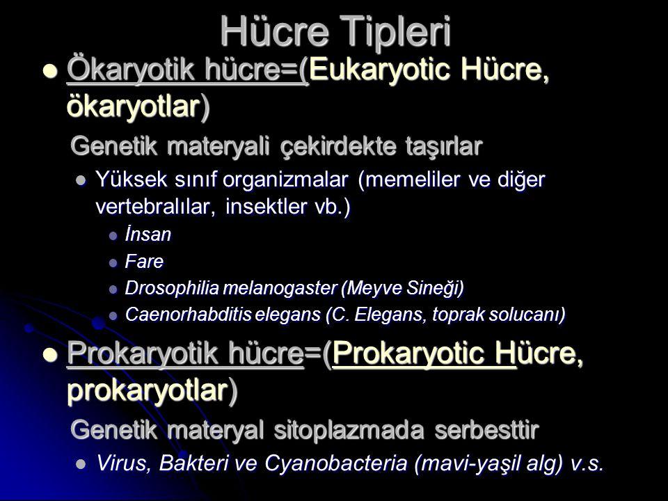 Hücre Tipleri Ökaryotik hücre=(Eukaryotic Hücre, ökaryotlar)