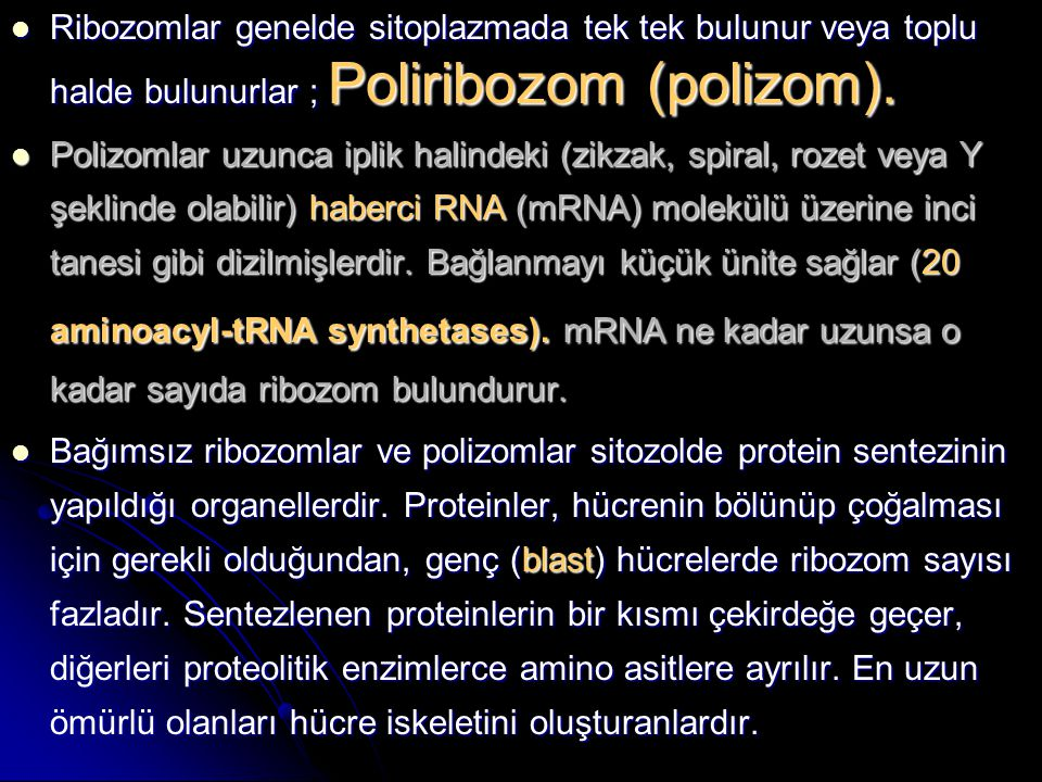 Ribozomlar genelde sitoplazmada tek tek bulunur veya toplu halde bulunurlar ; Poliribozom (polizom).