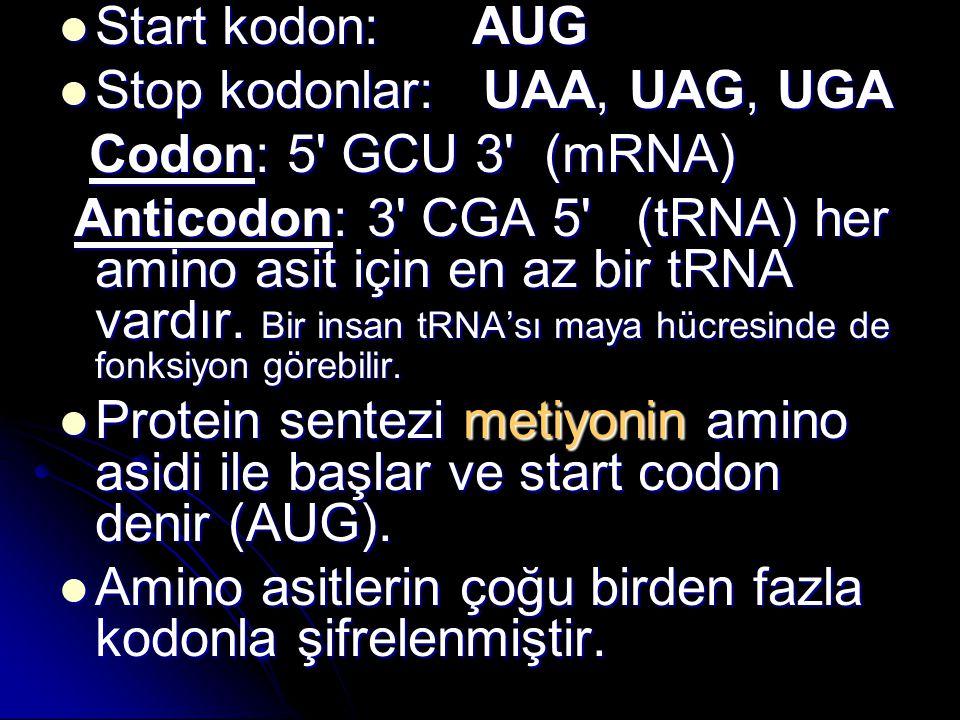 Start kodon: AUG Stop kodonlar: UAA, UAG, UGA. Codon: 5 GCU 3 (mRNA)