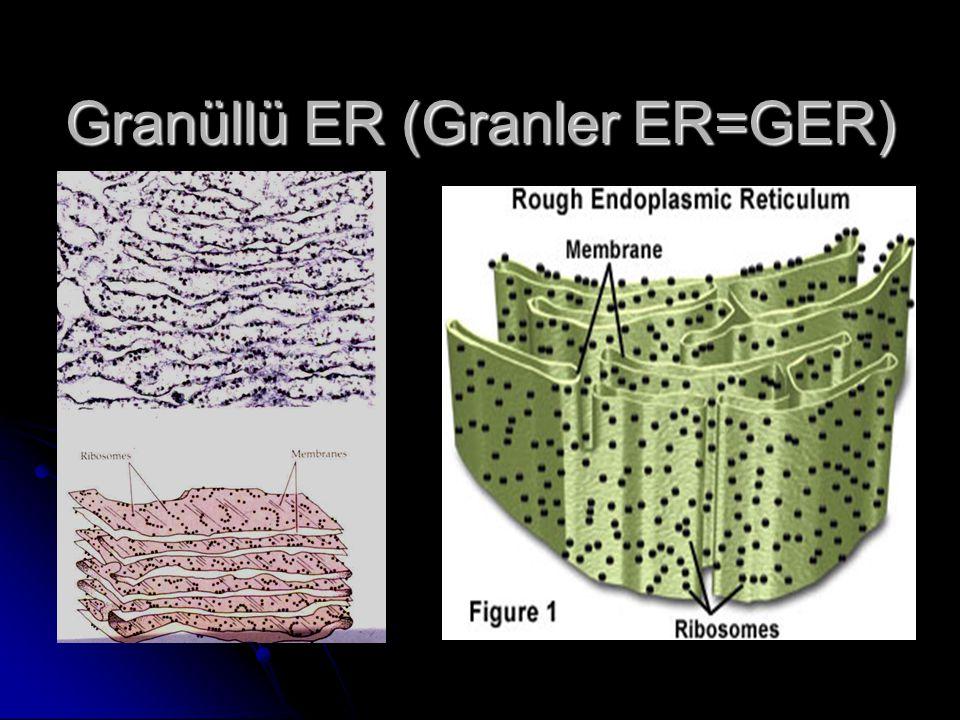 Granüllü ER (Granler ER=GER)