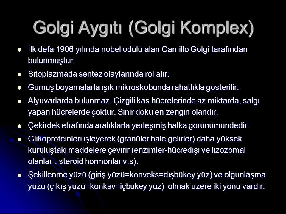 Golgi Aygıtı (Golgi Komplex)