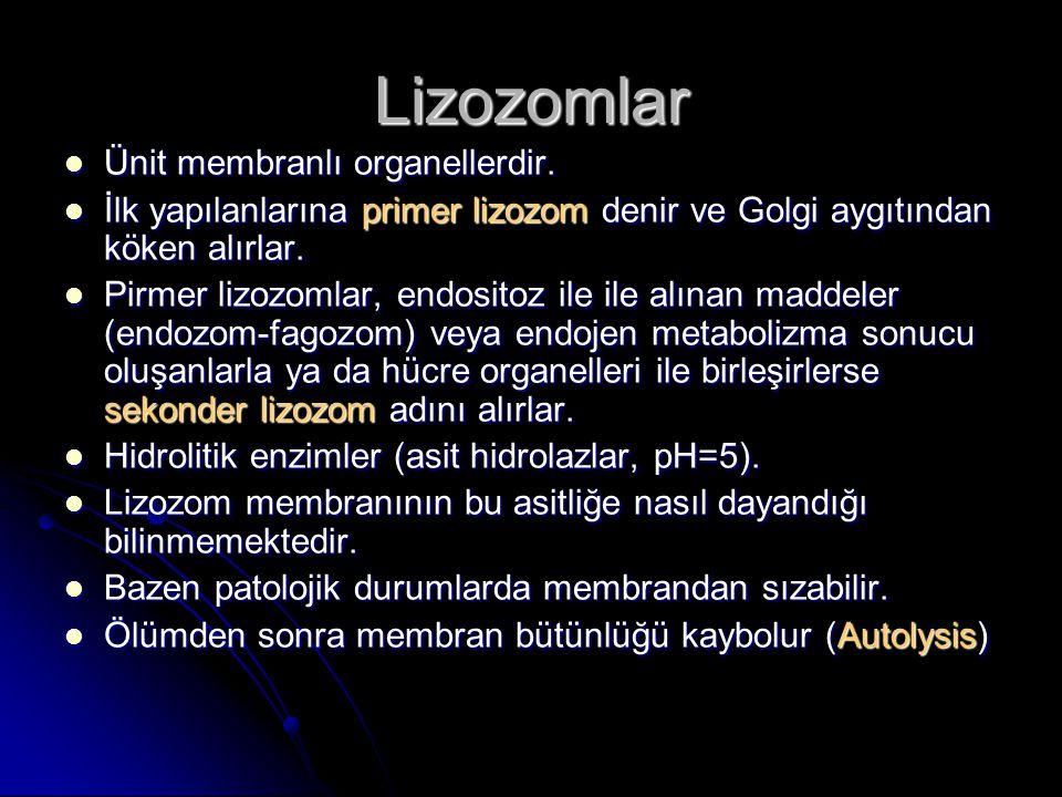 Lizozomlar Ünit membranlı organellerdir.