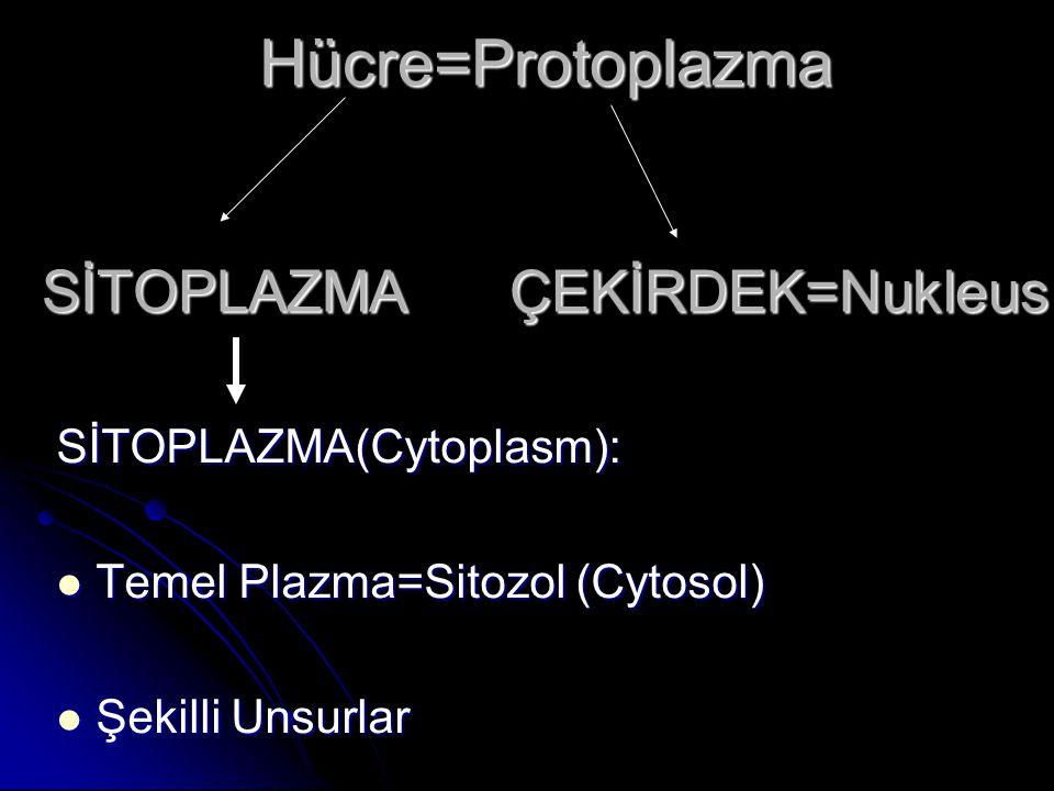 Hücre=Protoplazma SİTOPLAZMA ÇEKİRDEK=Nukleus