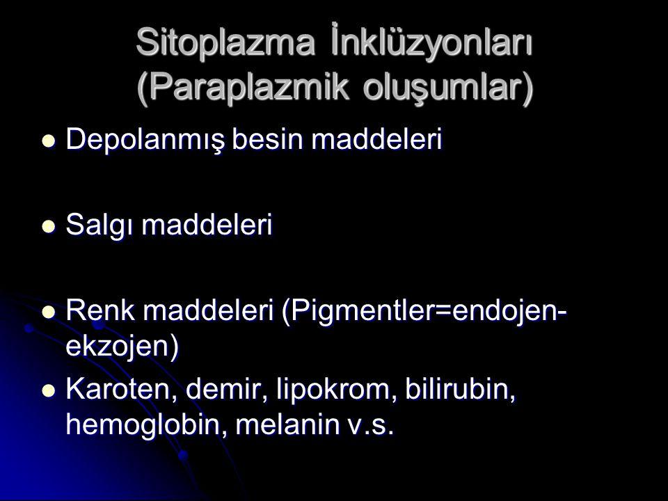Sitoplazma İnklüzyonları (Paraplazmik oluşumlar)